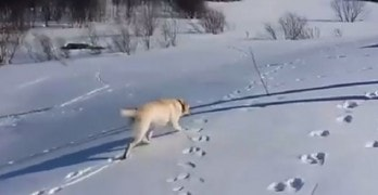 Dog Has the Best Day Ever Sliding Down a Snowy Hill