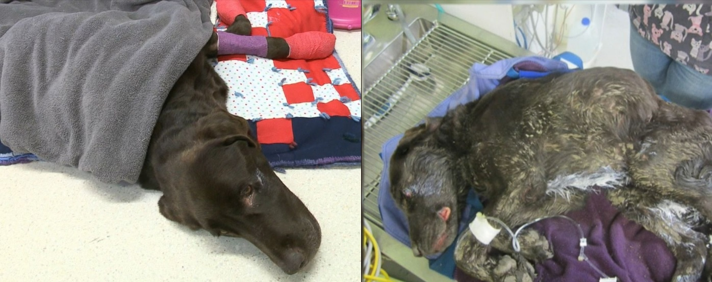 Dog Rescued After Spending a Month Trapped in the Bottom of a Well