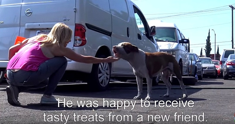 This Hope for Paws Rescue Is Unlike Any Other They've Ever Had…