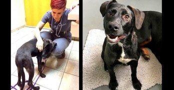 Abused Puppy Chased Down the Street With a 2×4 Is Now All Smiles