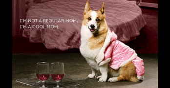Dogs Recreate Mean Girls, and They're So Fetch!