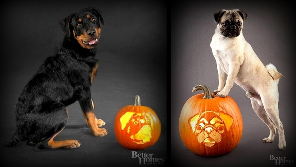24 Pup O'Lanterns to Make Your Howloween Spooktacular