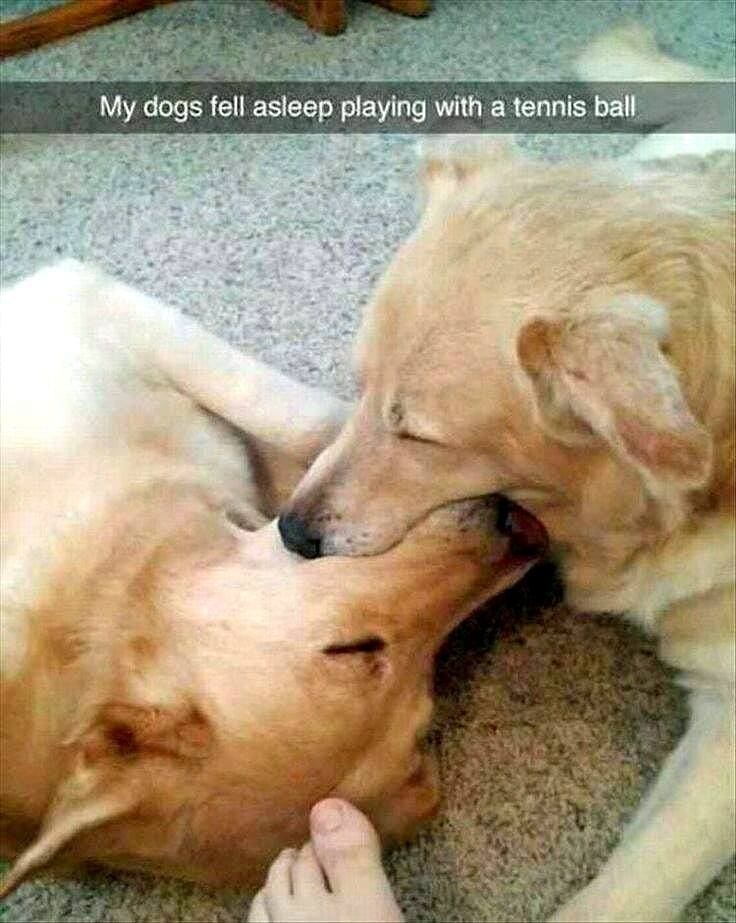 27 Of The Funniest Animal Snapchats