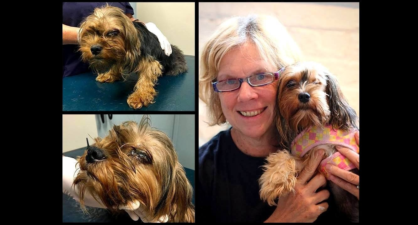 Neglected, Discarded Puppy Mill Mama Finally Loved for the First Time in Her Life