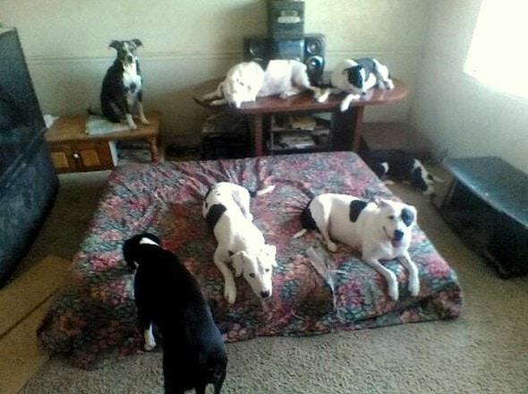 10-7-16-update-on-arden-eight-dogs2