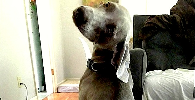 Cheeky Wife Sends Husband Underwear Pic of the Dog