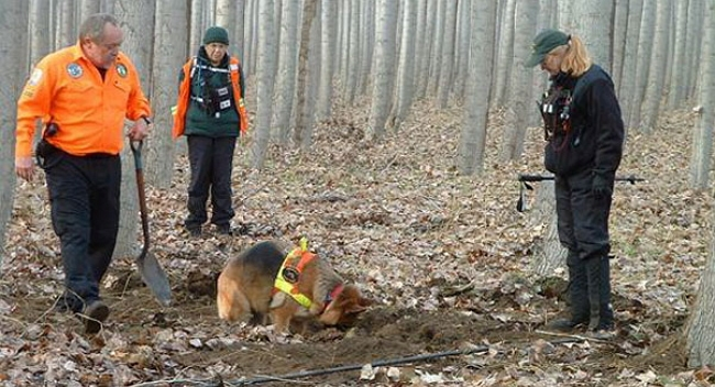Search And Rescue Dogs In The  S