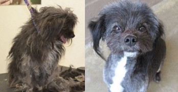 Neville's Makeover: New Lease on Life and the Hope for a Forever Family