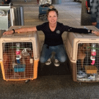 Soi Dog Foundation Rescues Cinderella & Leanne from Thailand Dog Meat Trade