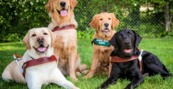 National Guide Dog Month: Natural Balance Honors the Top Human-Canine Teams Who Make Us Believe