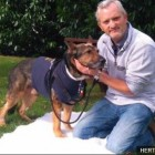 Brave British Police Dog Recovering After Stab Wound