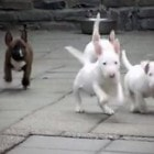 Cute Alert! Adorable Puppies Will Make You Smile