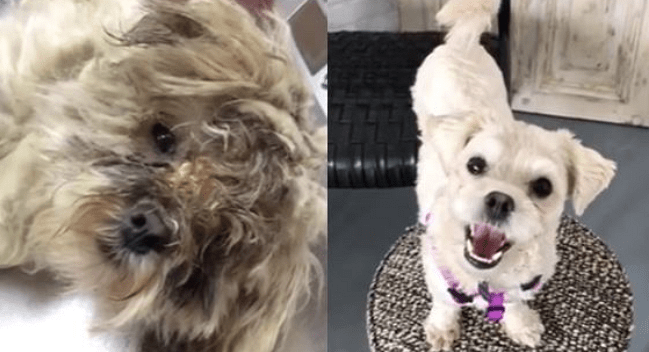 Antonia's Amazing Transformation: From Chicago Dumpster to Pure Joy