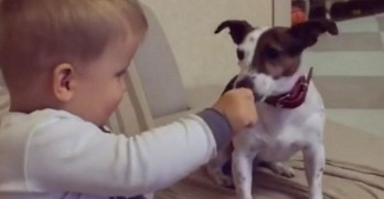 Baby Spoon Feeds His Jack Russell Pal
