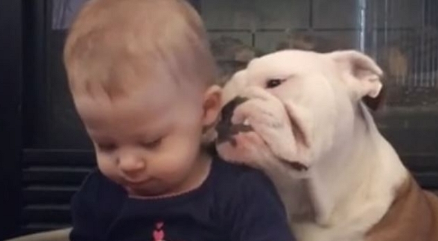 The Baby and the Bulldog – Best Buddies