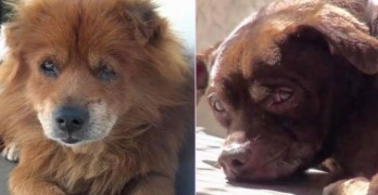 Surrendered Dogs Stage Hunger Strike to be Reunited at Shelter