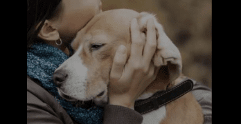 Things We Should Always Remember as Dog Lovers
