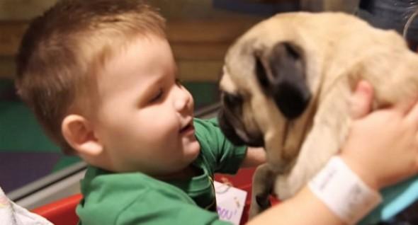 doug-the-pug