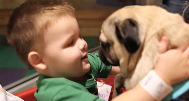 Doug the Pug Brings Miles of Smiles