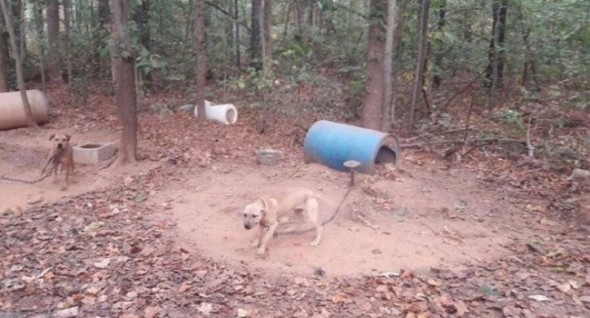 The dogs were kept in horrific conditions. They are now in the custody of various local animal control agencies. Photo: Meriwether County Sheriff's Office.