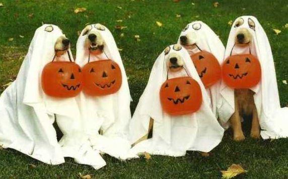 Seasonal Photo-Ops: These Halloween Dogs Are Killin' It!