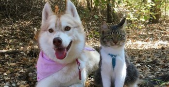 "Paying It Forward! Rosie the ""Husky-Cat"" Raises A Litter!"