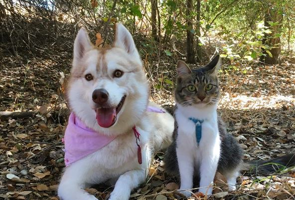 """Paying It Forward! Rosie the """"Husky-Cat"""" Raises A Litter!"""