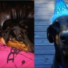 It's Ryan Lochte's Dog's 8th Birthday….AGAIN.