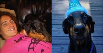 It's Ryan Lochte's Dog's 8th Birthday….AGAIN.
