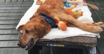 Dog Battling Cancer Takes A Last Roll Around Town