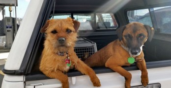 Dogs Central to Protecting and Saving Endangered Species in New Zealand