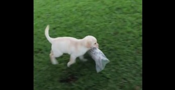 You Can Do It! Adorable Pup Struggles to Fetch Paper