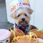 Meet Instagram Sensation, Popeye! Food Porn Never Looked So Cute!