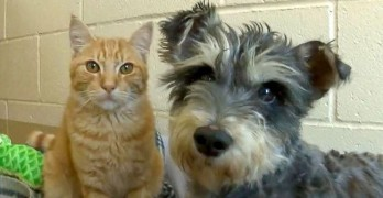Romeo & Juliet: Cat and Dog are a Bonded Pair at California Shelter