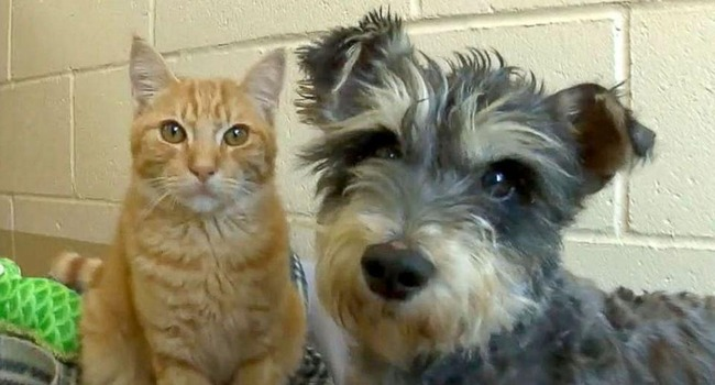 Romeo Amp Juliet Cat And Dog Are A Bonded Pair At