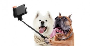 Selfies: Not Just for Humans, Anymore