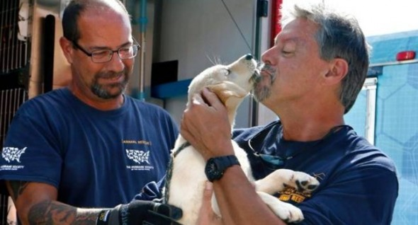 Rescuers are happy to give the dogs a little love along the way. (Photo: NewsObserver)