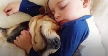 Sleep With Your Dog? Here Are the Reasons You Should