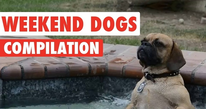 weekend-dogs