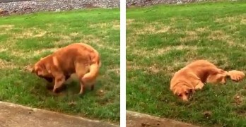 Dog Caught Digging Up the Yard Pretends to Be Totally Innocent