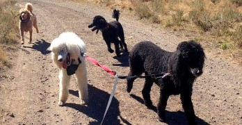 Blind Dog's Sisters Volunteer to Become Her Guides