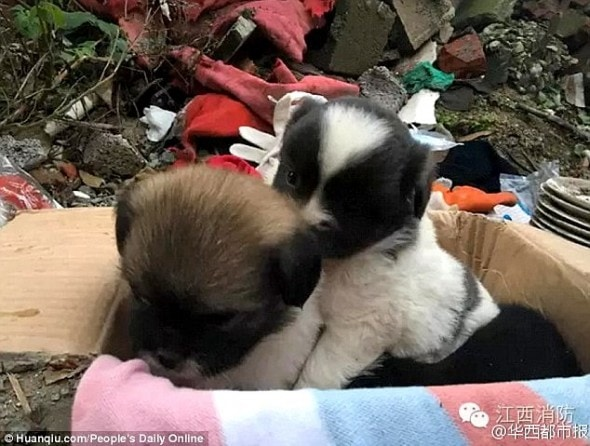 11-1-16-firefighters-save-a-mom-and-her-nine-pups-from-a-collapsed-house-in-china3