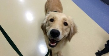 Children's Hospital In Pennsylvania Gets Full-Time Therapy Dog