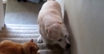 Dogs That Are Totally Terrified of Their Feline Siblings