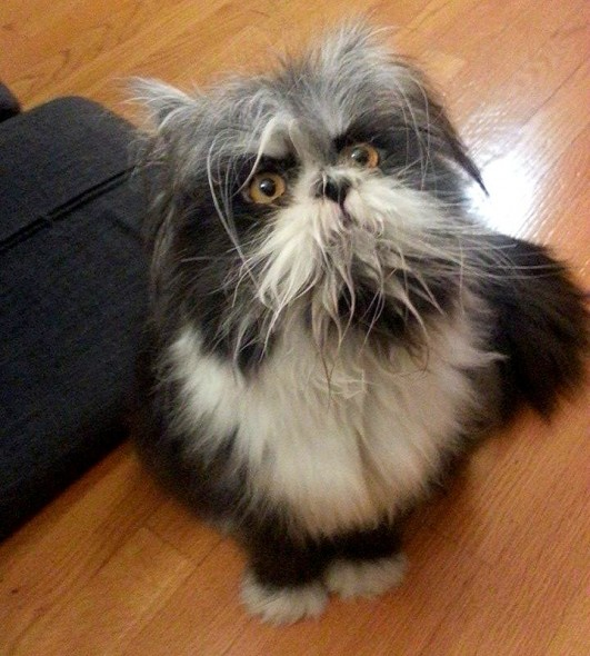 11-10-16-people-are-doing-a-double-take-over-this-cat-who-looks-like-a-dog0