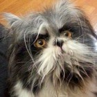 People Are Doing a Double Take Over This Cat Who Looks Like a Dog