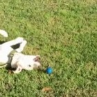 The Grace and Beauty of Dogs in Slow Motion… And Sometimes Not so Much