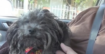 Dog Abandoned When Family Moves Away Gets the Rescue He Needed