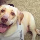 Dynamic Dog Born With Dwarfism Learn How to Walk Again