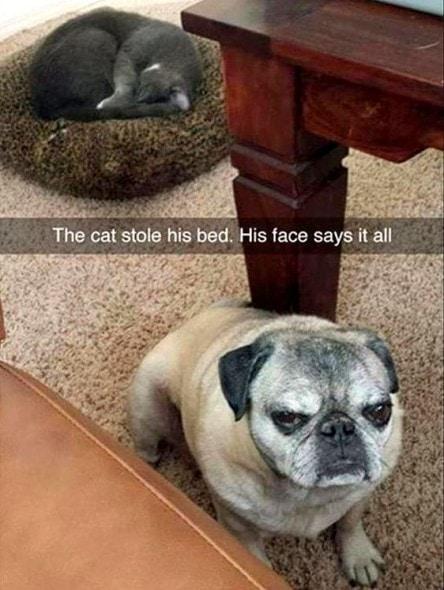 11-11-16-snapchat-pet-photos20